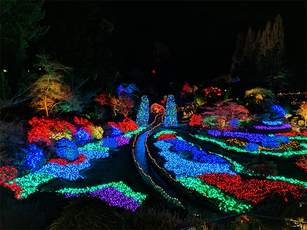 a view of field full of lights at Butchart Gardens during their Christmas display.